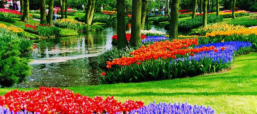 Der Keukenhof liegt auf halbem Wege zwischen Leiden und Haarlem in dem kleinem Ort Lisse. Wenn Sie Ihre Fahrt zur jährlichen Tulpenblüte etwa um eine Stippvisite nach Amsterdam verlängern möchten, ist der beliebte Blumenhof ein idealer Ausgangspunkt. Er gehört seit über 60 Jahren zu den größten Touristenattraktionen der Niederlande und ist ein attraktives Ziel für Blumenliebhaber aus aller Welt, die sich dort auch für den eigenen Bedarf eindecken können.